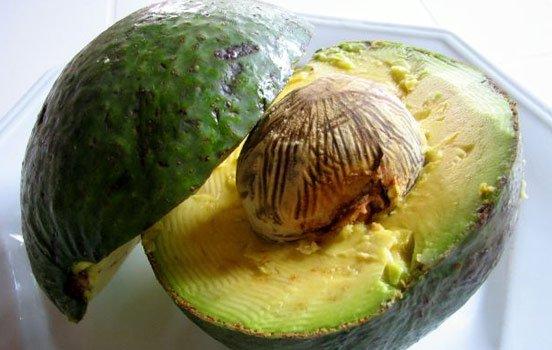 abacate-bioretro
