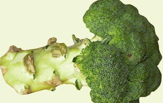 brocolis-bioretro
