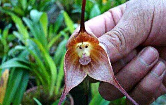 macaco-orquídia-animal-bioretro