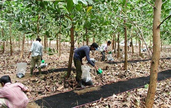 agricultores-biocarvão