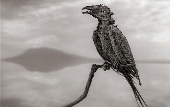 pássaro2bioretro