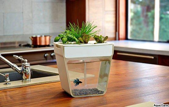 Como criar um mini ecossistema for Como criar peces ornamentales en casa